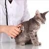 Ветеринарные клиники в Некрасовке